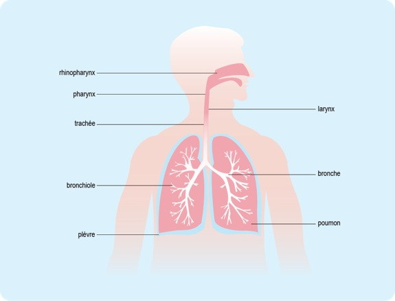 mal au poumon toux seche