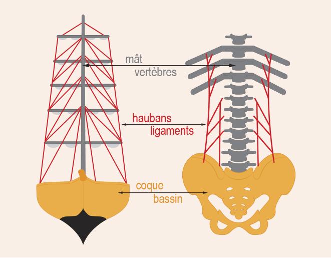 Schéma comparant la structure du dos avec celle d'un voilier, où les vertèbres sont le mât, les ligaments sont les haubans, et le bassin est la coque