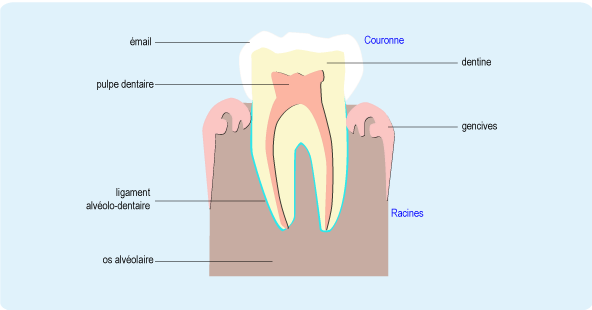 douleur dentaire cause