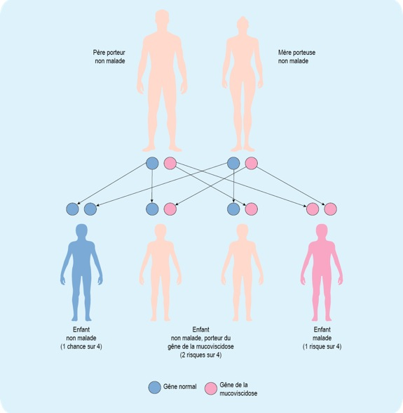 Schéma : mode de transmission de la mucoviscidose