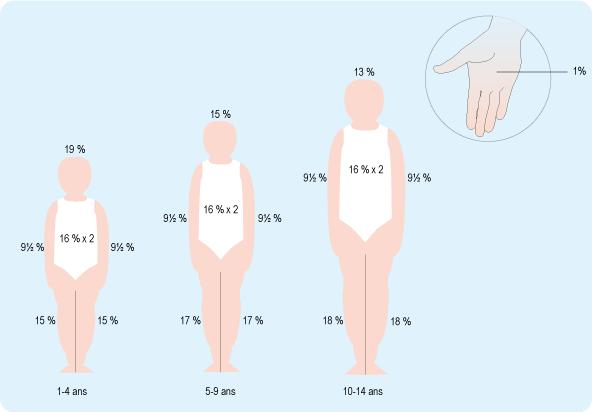Schéma représentant les surfaces de la tête, du tronc, des bras et des jambes d'un enfant par rapport à son corps (cf. description détaillée ci-après)